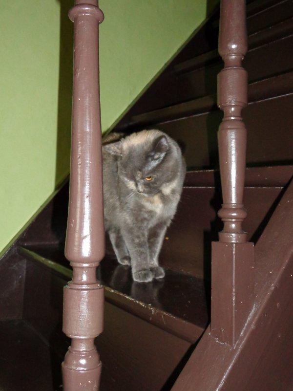 Chany, la maman des 4 loulous en observation sur l'escalier ..