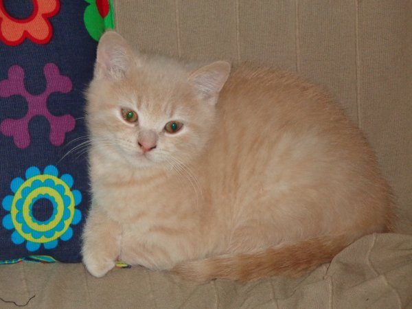 Indy, 12 semaines ,disponible