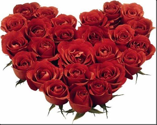 les roses rouge que j'aime