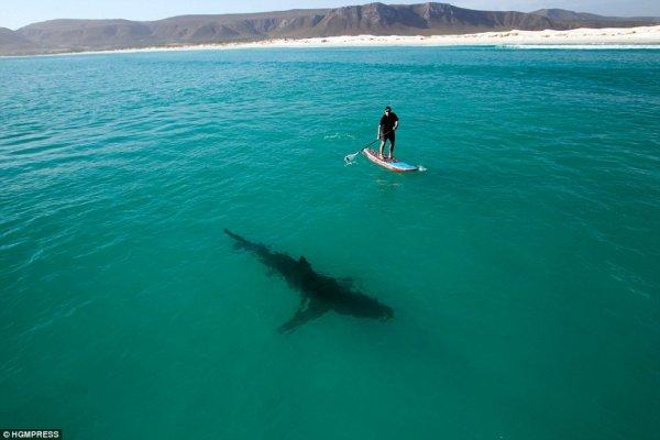 Le requin est très respectueux envers l'homme faites en autant!
