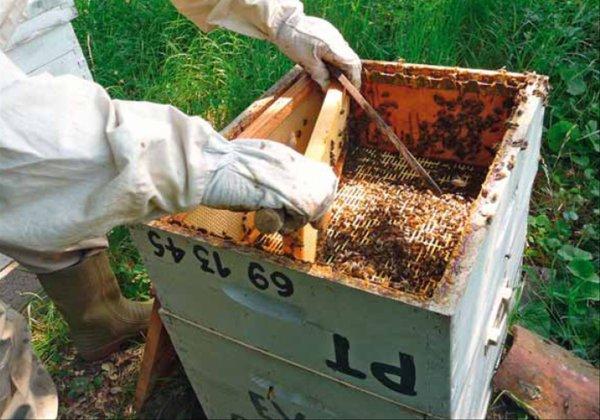 Les abeilles, auxiliaires de biodiversité