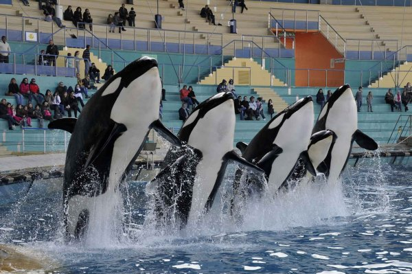 Pour ou contre, les internautes ont débattu sur les parcs aquatiques