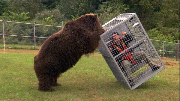 L'ours trouve que cette humain est à sa place