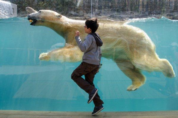 Un ours et un enfant fonds la course