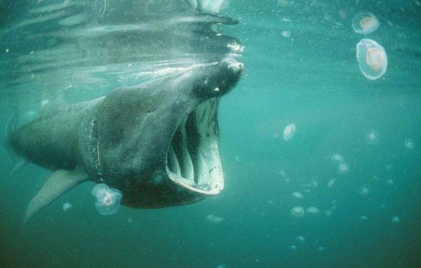 VIDEO. Hérault: Un énorme requin filmé au Cap d'Agde