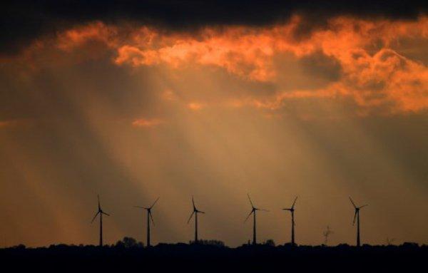 Collisions, déforestation... Quand le développement des énergies renouvelables nuit aux animaux