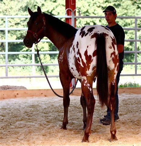 Ce cheval et Magnifique je le veus *_____* <3