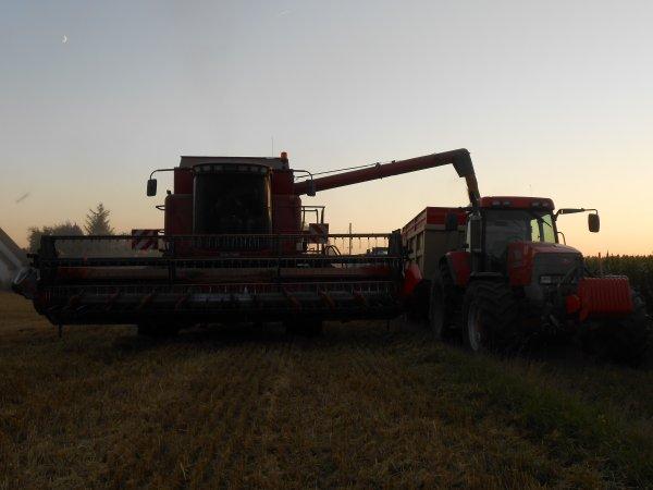 Moisson du blé 2012