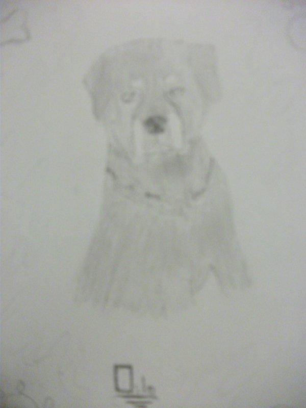 l'un des mes dessin