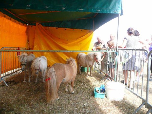 La Fête du cheval