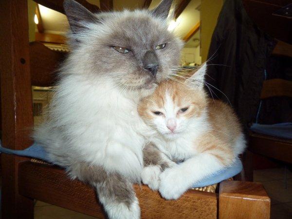 Menphis et petite  Mimine