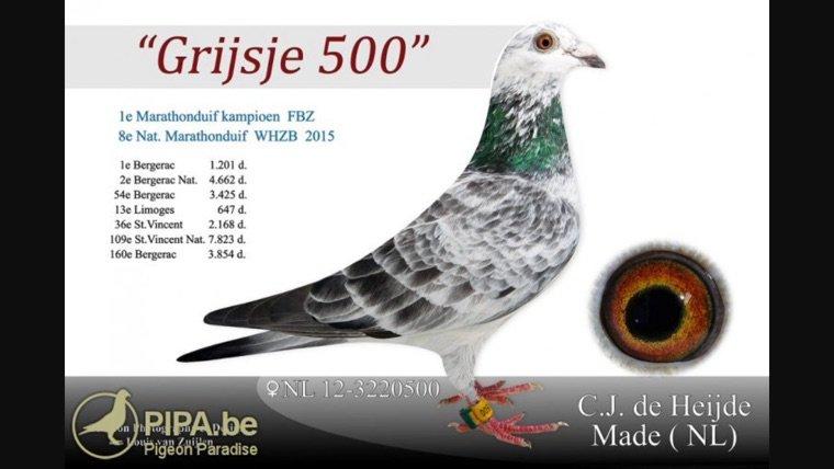 Le mosa Cor 100% cor de heijde(nl)