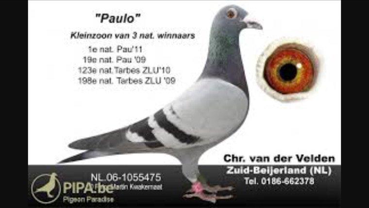 Le fils de Paulo!!!