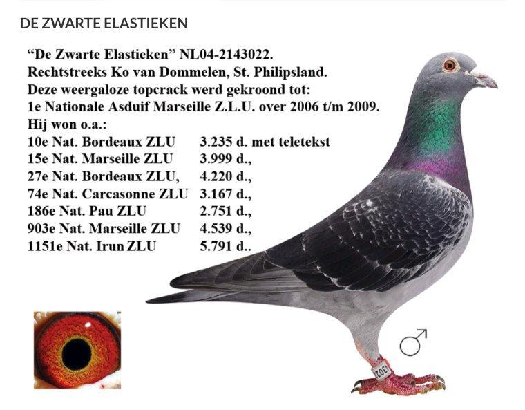 Le top pour van Dommelen