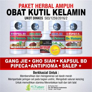 Obat Kuti Kelamin Herbal