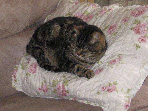 mon bébé Poussy  a rejoints le paradis des chats,il me manque!mais repose en paix mon bébé