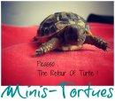 Photo de Minis-Tortues