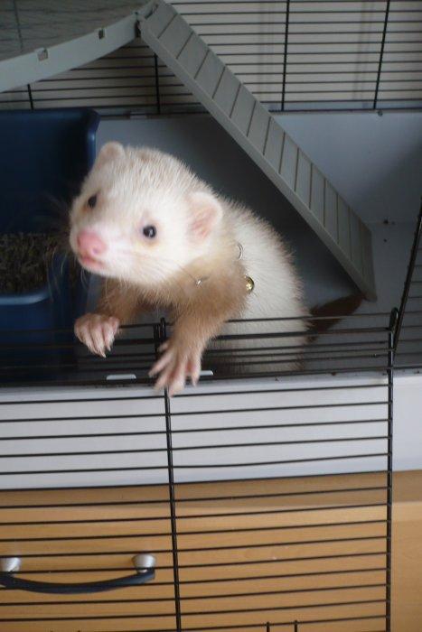 ferret's blog