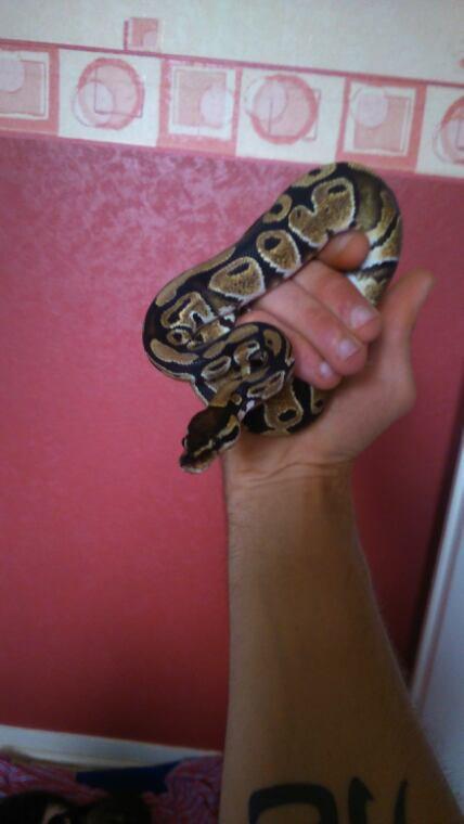 Une passion les reptiles.