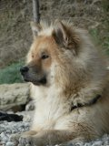 Photo de daiko-eurasier
