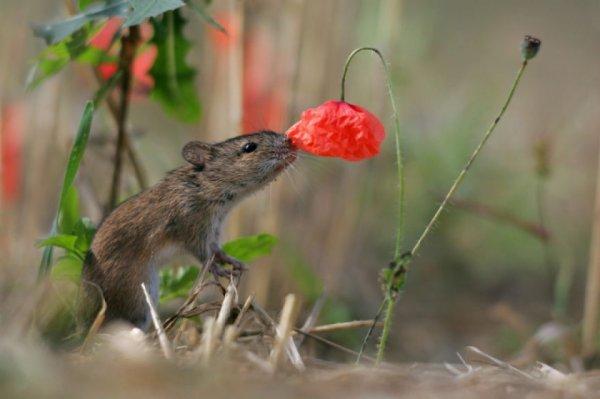 fleur et animaux