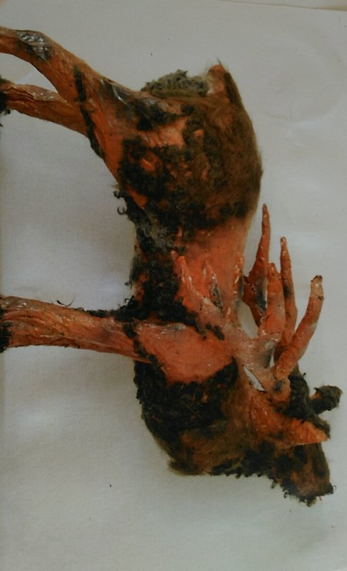 Cerf , couvert de poils et de cheveux