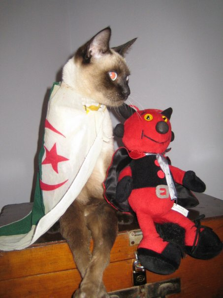 meme les chats aiment lalgerie