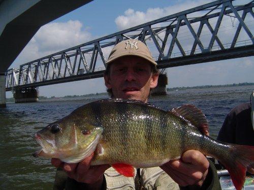 session haringvliet le paradis du big fish