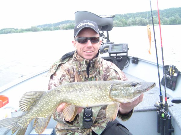 pike on the fly , Fa et beef