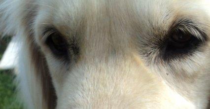C'est dans ses yeux, que je retrouve l'espoir.