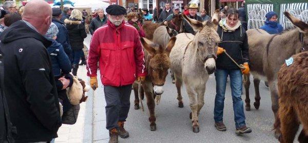 Foire aux ânes de Moyaux : 23ème édition.