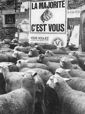 Pour tout les petit mouton!!!!