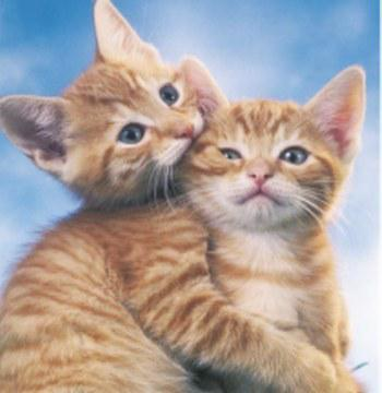 Deux chaton trop mignon x r0uliette x - Photo chaton trop mignon ...