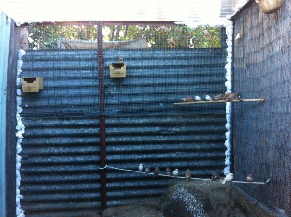 Aperçu de la nouvelle pièce d'élevage + voliere.