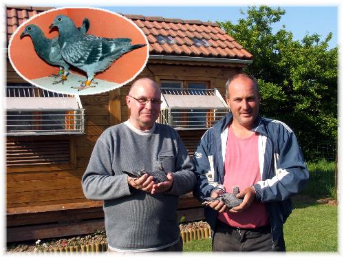 Nous étions partis chercher un jeune pigeon acheter a la vente de la société La Sentinelle  (projet d'insertion par la colombophilie) organiser par  http://choco-meulemans.skyrock.com/