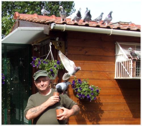Premier entraînement des pigeons 1 AN le 25 MAI 2011 ainsi que les jeunes 2011