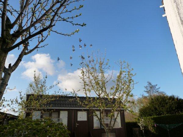 PAPYPIGEON de retour avec ce superbe ciel bleu du Nord !!!!!!