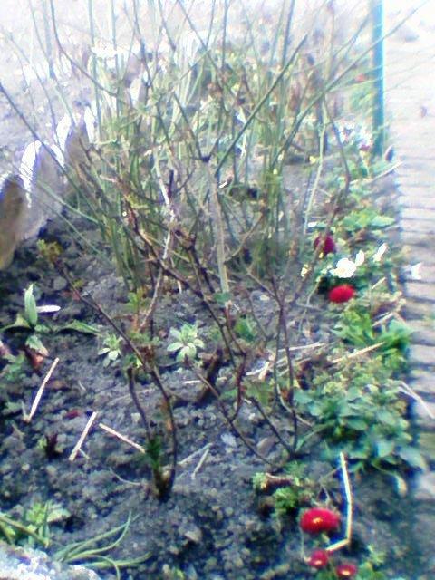 mon jardin privè