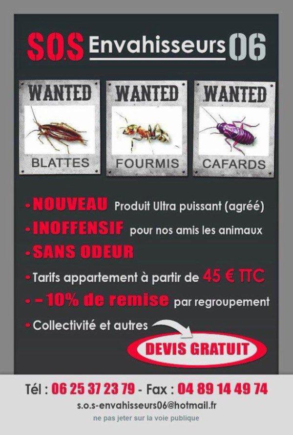Traitement Cafards, Blattes, Fourmis (Nice, Cannes, Menton, Roquebrune, Monaco).