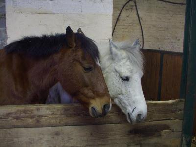 Java & Faldo , des poneys plus que exeptionel.♥