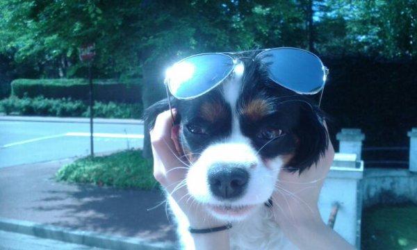 Trop beau mon chien