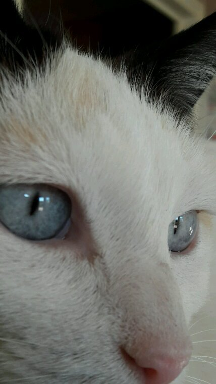Blues Eyes