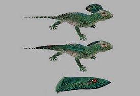 Rex Coelurosauravus