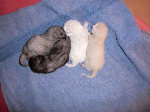 Quatre bébés chats qui ont frôlé la mort !