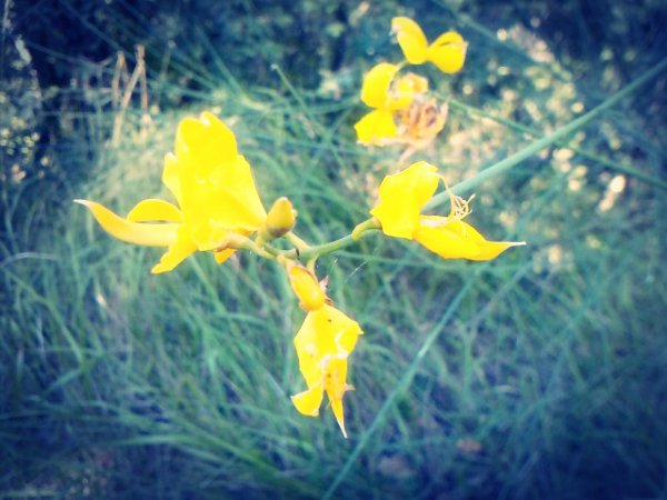 Un simple regard posé sur une fleur et voilà une journée remplie de bonheur.