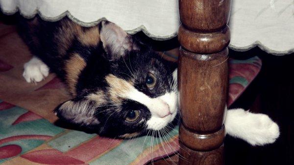 Ceux qui jouent avec les chats doivent s'attendre à être griffés.