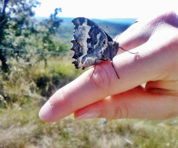 On dit ici que le vent parfois est tellement fort qu'il arrache les ailes des papillons