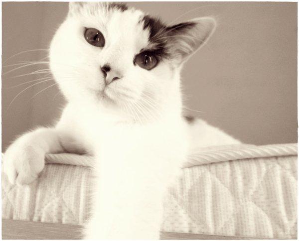 Viens petit, petit chat, viens jouer avec moi !