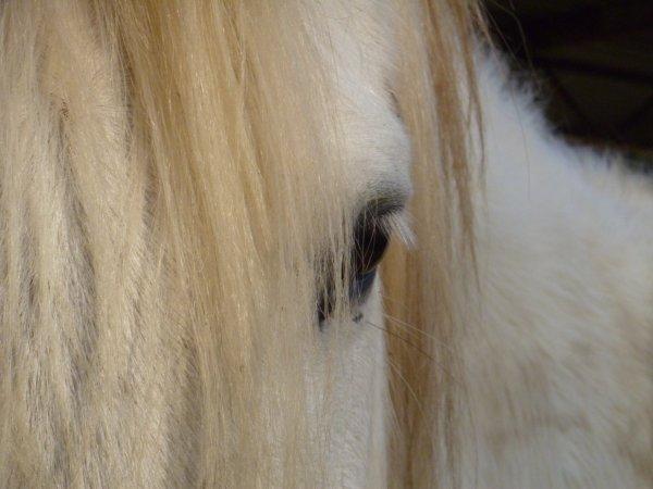 """""""L'équitation bien plus qu'une passion, une raison de vivre... <3"""""""