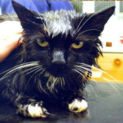 Nancy  chat martyrisée, sauvée